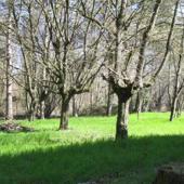 Localita' Battiloro Vigiano